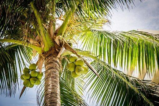 Raw kuchyně miluje kokosový olej